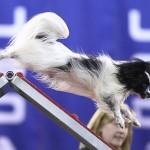 Masher ~ 2011 Cynosports Steeplechase