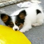 Smacker ~ 14 weeks old
